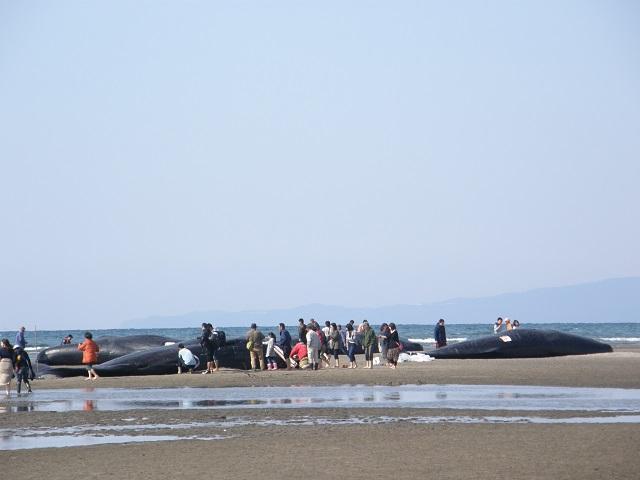 クジラ-1.jpg