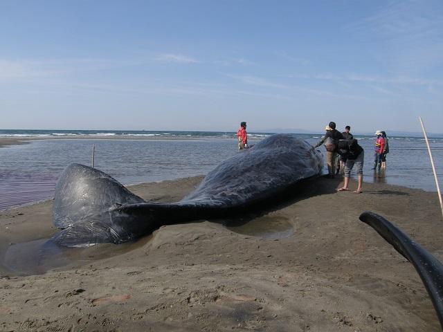 クジラ-3.jpg