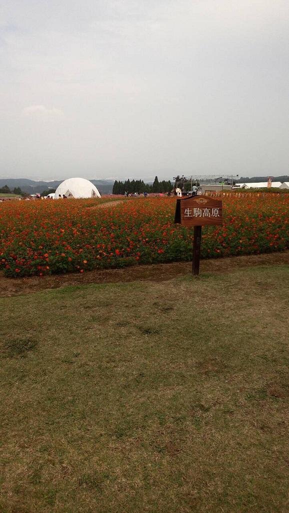 コスモス祭01.JPG