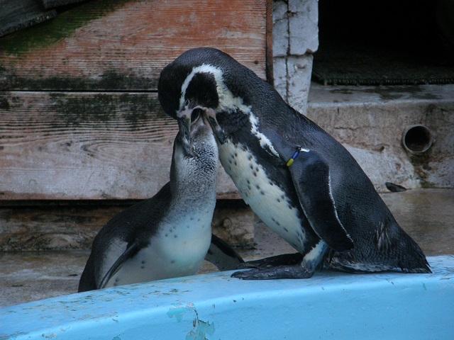 ペンギンのエサやり.jpg