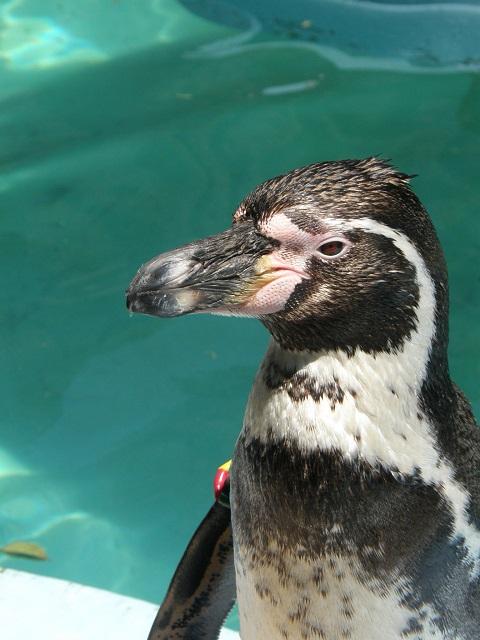 ペンギン-0421.jpg