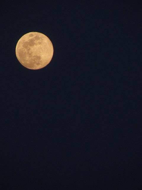 月-0501.jpg