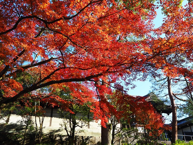祖廟横の紅葉.jpg