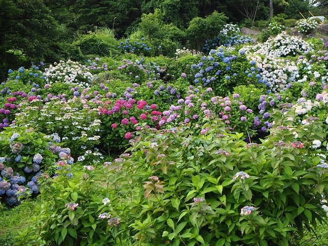 笠山農園-1.jpg