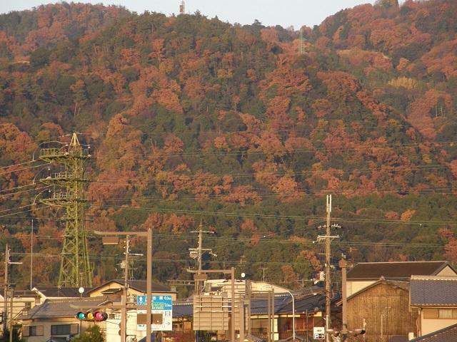 緑色の鉄塔.jpg