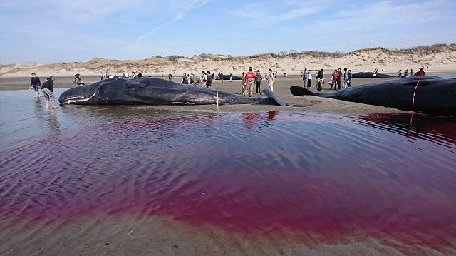 血の海.jpg