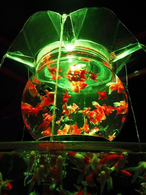 金魚-1.jpg