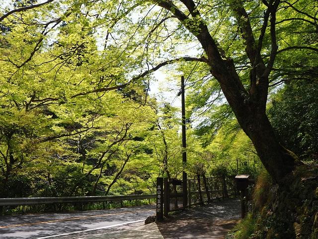 高山寺入口.jpg